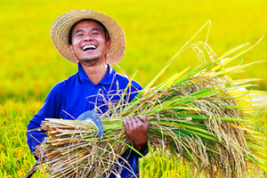 中国农民丰收节注册送白菜网